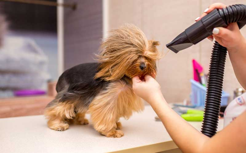 Best Dog Hair Dryers