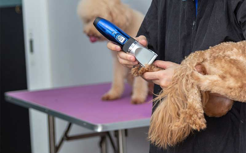 best poodles dog clippers