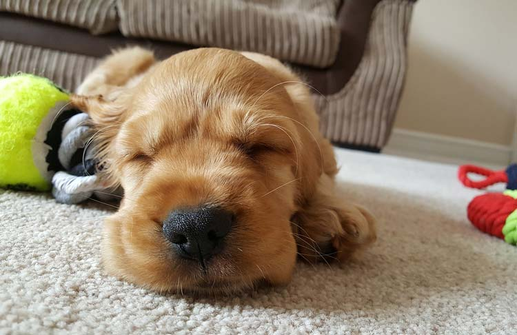 Is My Puppy Sleeping Too Much